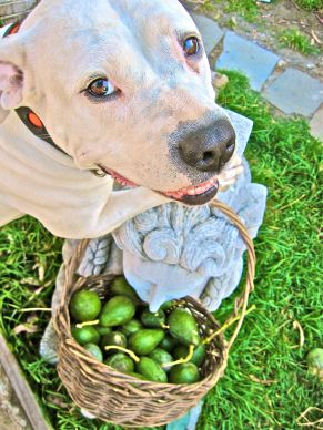 chomsky avocado2