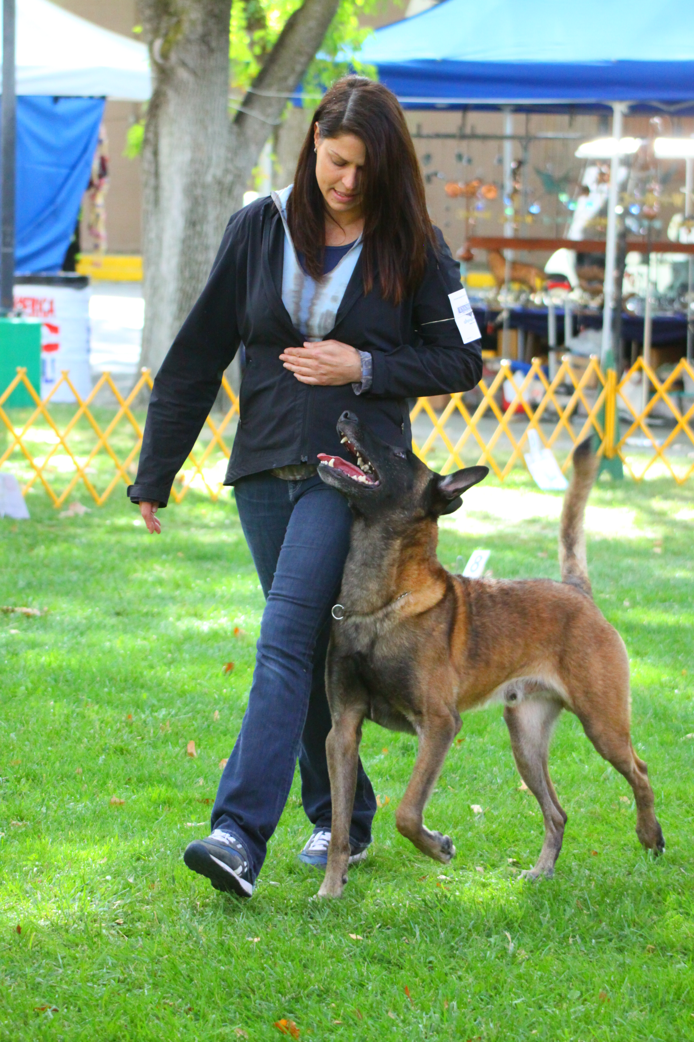 Note to the American Public: Belgian Malinois, Look Don't Touch ...