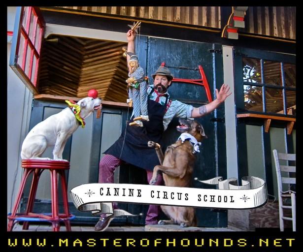 braunstien circus school