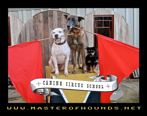 circus school dogs with flags