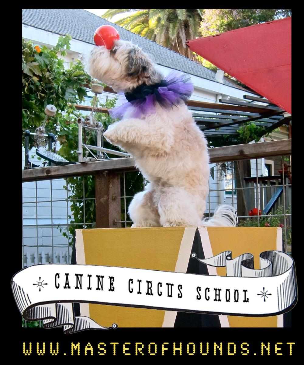 circus school ra ball ballance sit pretty