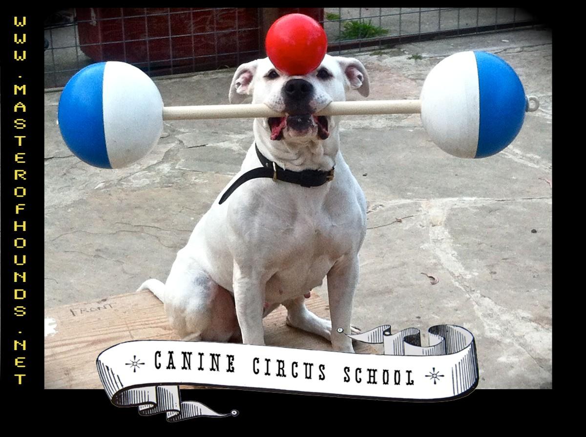 circus school strength and balance