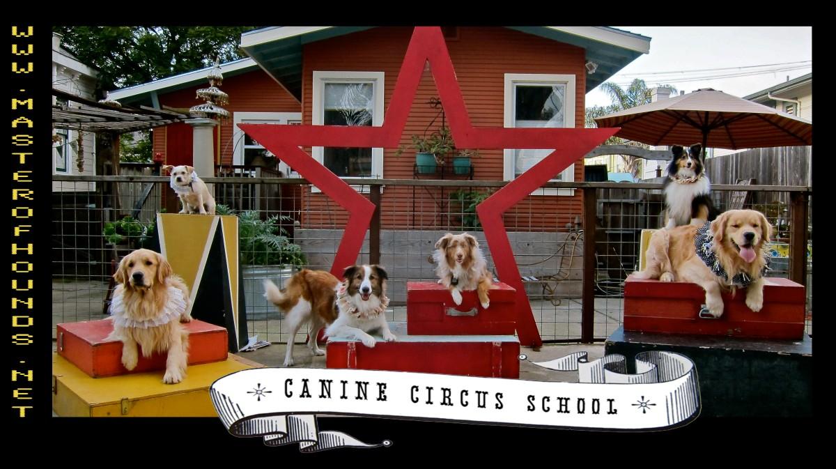 sunday circus 1