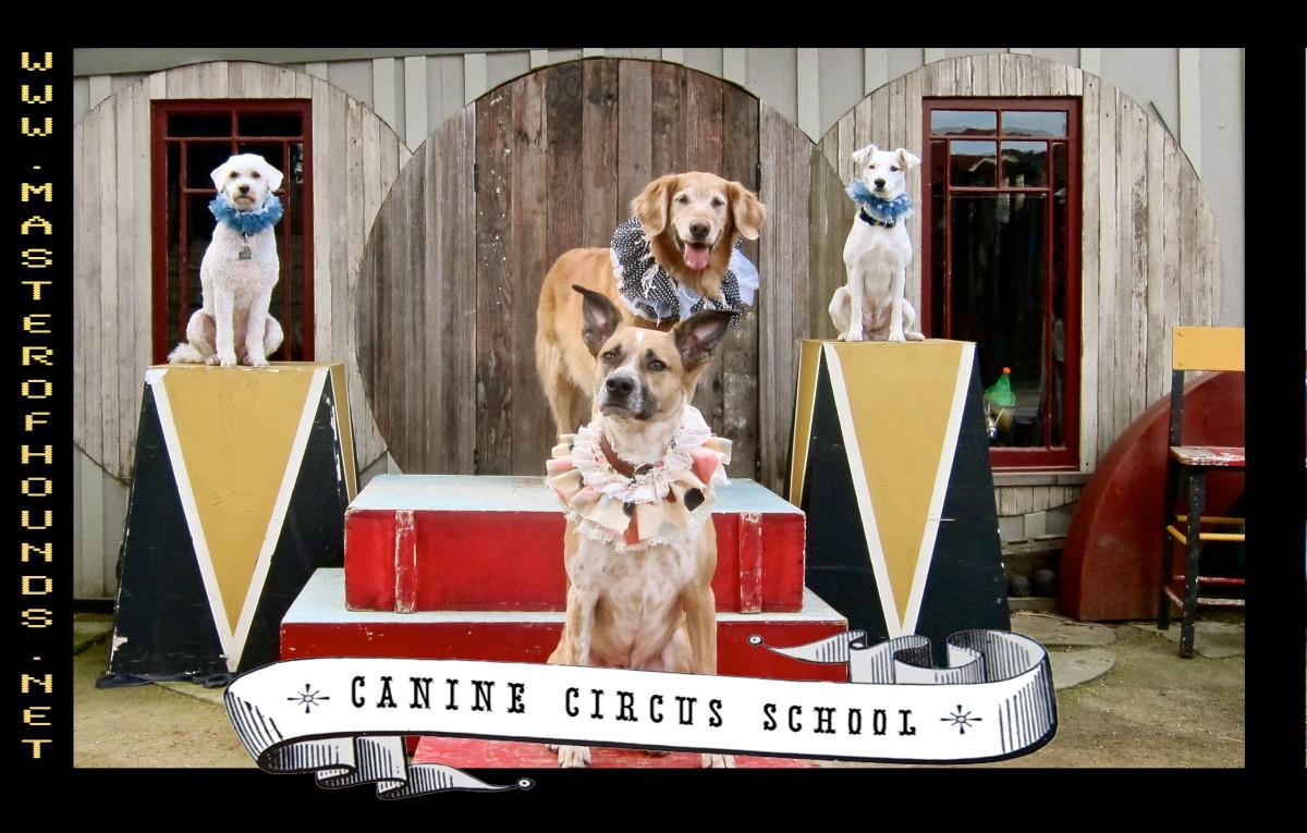 thursday circus class