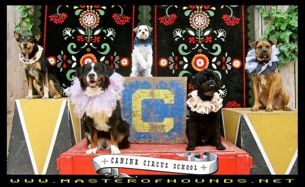 canine circus school 2