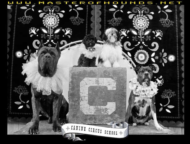 circus school corso pit and poodles