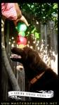 canine circus school 4 ball ball balance silas