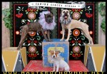 canine circus school bully troupe