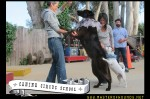 Canine Circus School is the most fun