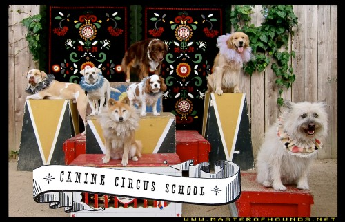 canine circus school summer 1 clive cherry