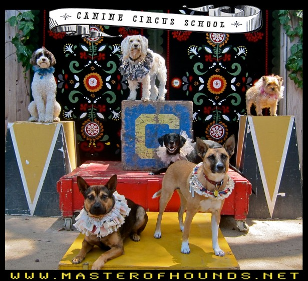 canine circus school summer 1