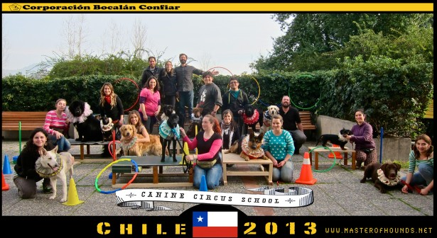 canine circus school chile 2013