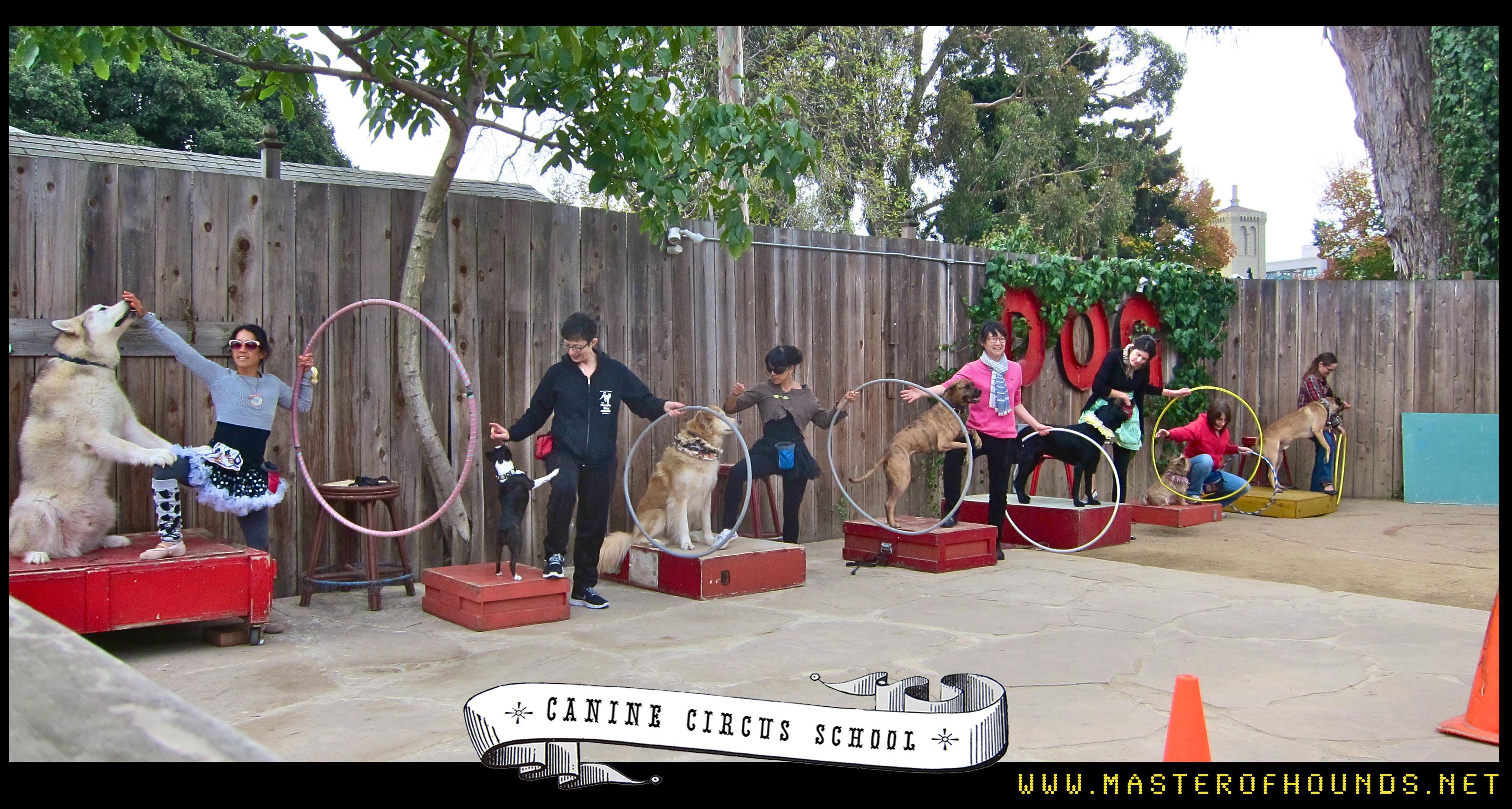 باکس petcargo xxl همراه با چرخ براس سگهای بسیار بزرگ