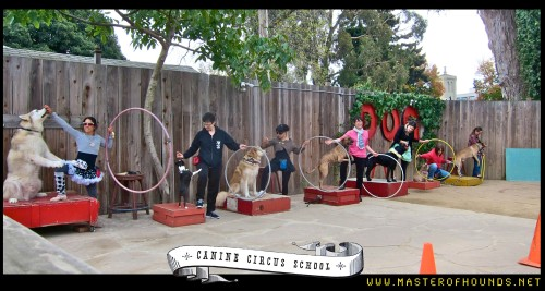 canine circus school class with swedish magazine
