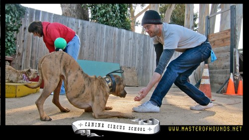 chris and nessie canine circus school