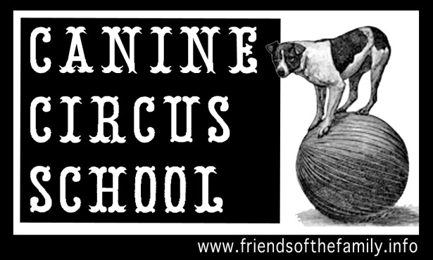 cznine circus school new biz card design