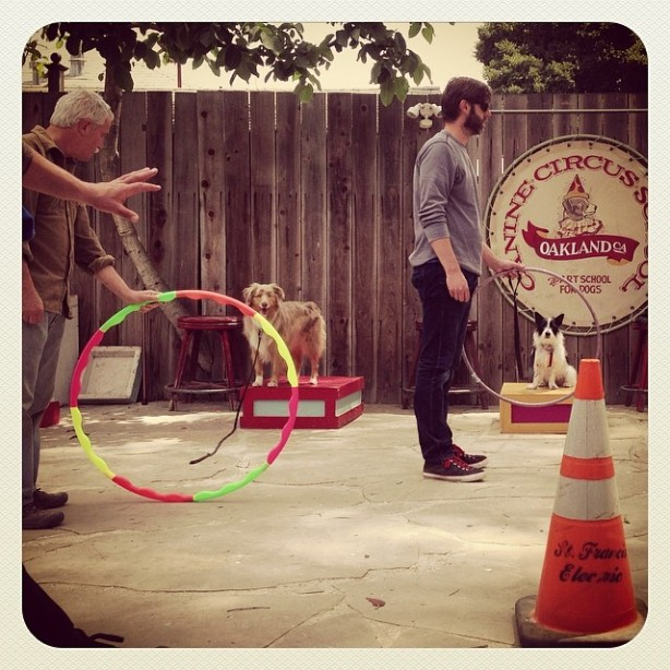 circus 1.5 canine circus school