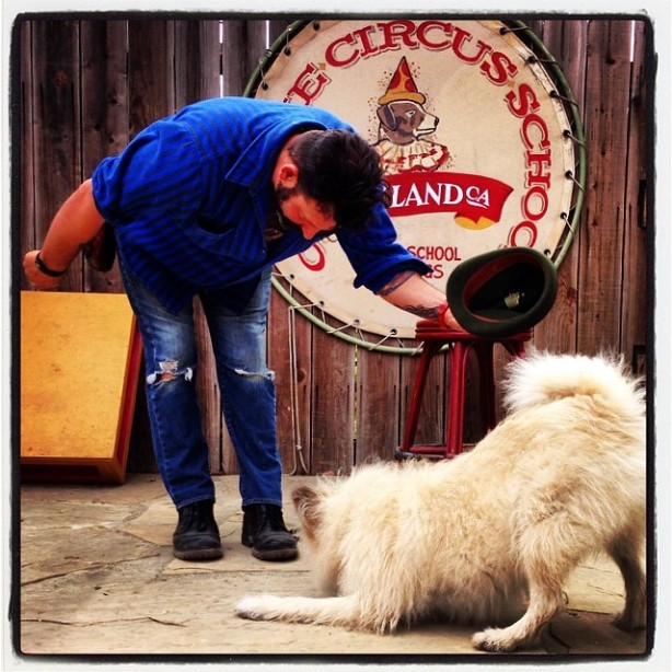 francis and clyde bow canine circus school
