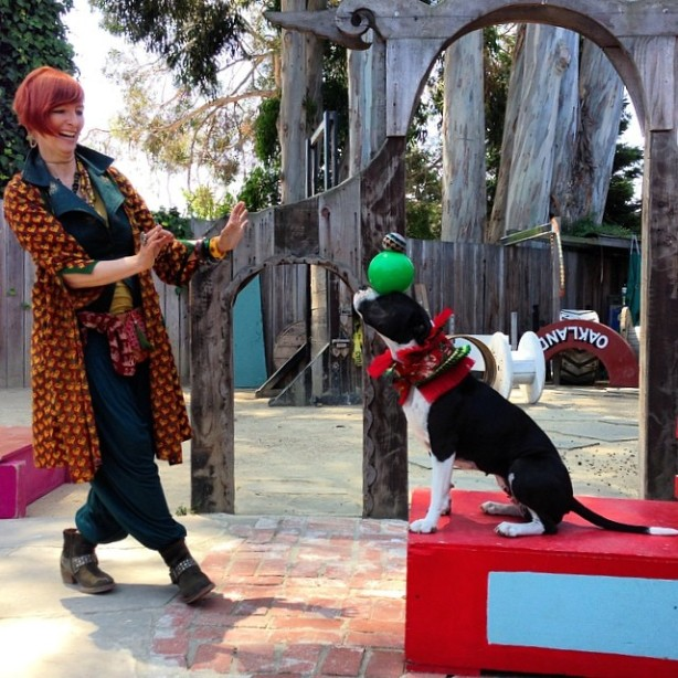 isha double head balance canine circus school