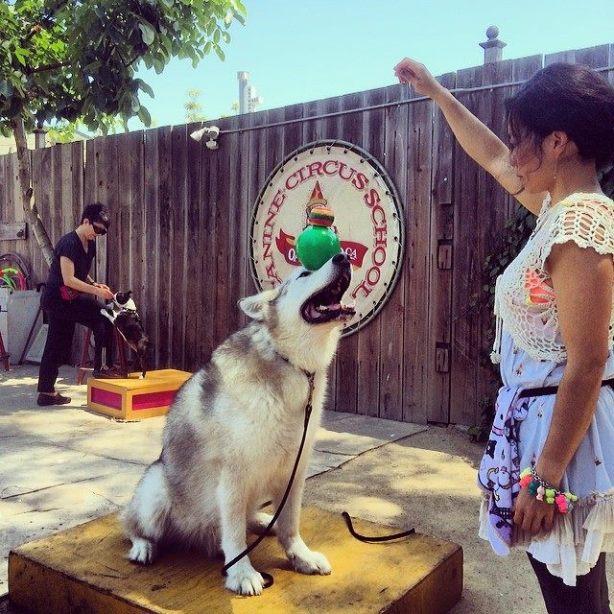 logan and kims canine circus school double head balance