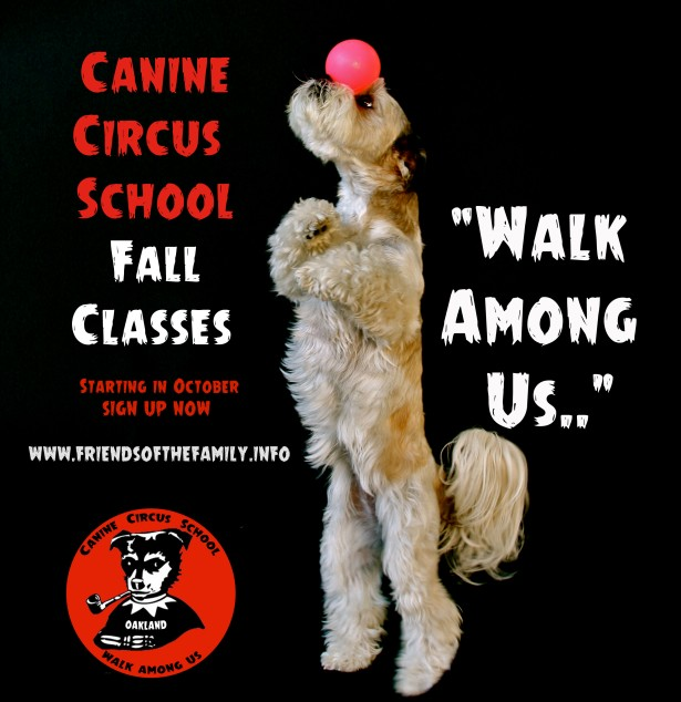 walk among us fall classes circus school
